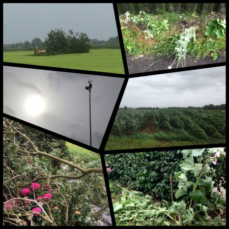 storm collage
