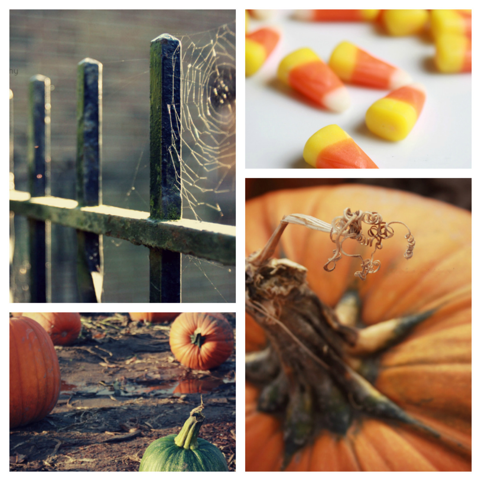 herfst collage