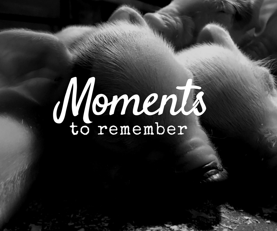 "Postkaart met varkens zwart wit ""moments to remember"""