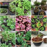 2018-04-28-kas-planten-collage